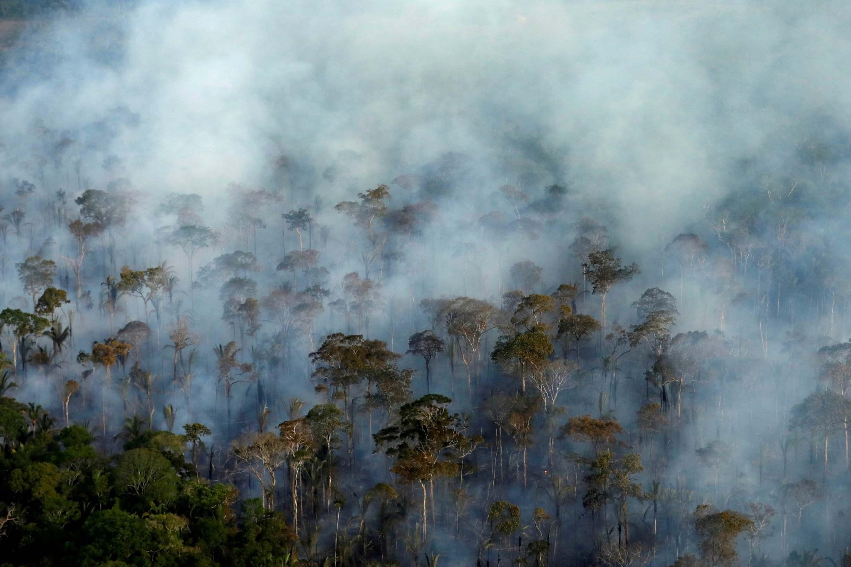 Padurea Amazoniana ar putea disparea in 50 de ani