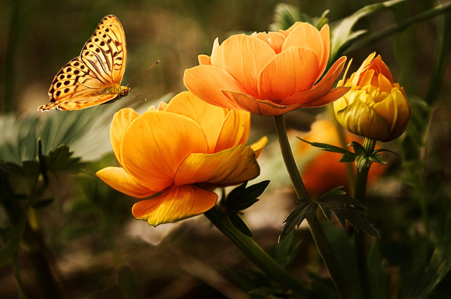 floare horoscop