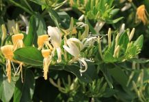 planta care te poate vindeca de covid-19
