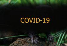 animalul purtator de Covid
